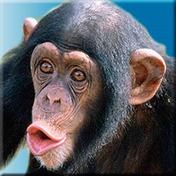 091210-trunk-monkey.jpg - 21973 Bytes